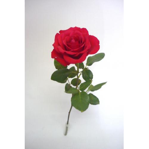 販売促進用に「バラの一輪花束」